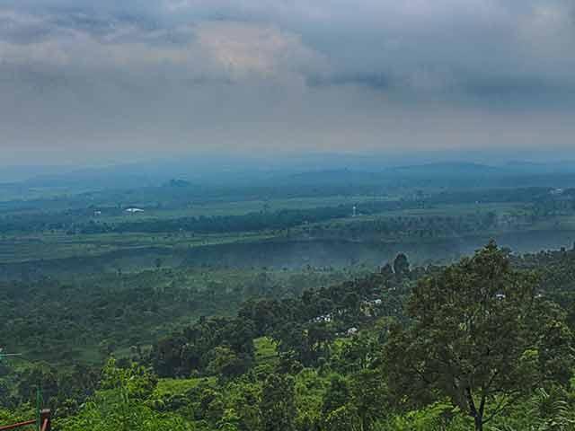 A view of Kumai tea garden