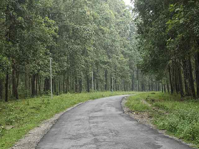 Road to Chapramari Wildlife Sanctuary