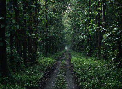 Forest Tour